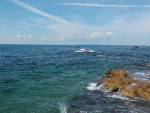 新潟 アオリイカのポイント 石灰藻 水質