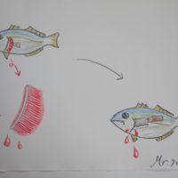 魚の血抜き 血抜きの理由