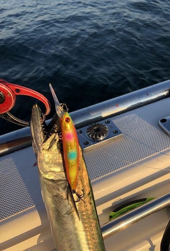 新潟東港 サワラ 鰆 サゴシ ボートサワラ 鰆釣り