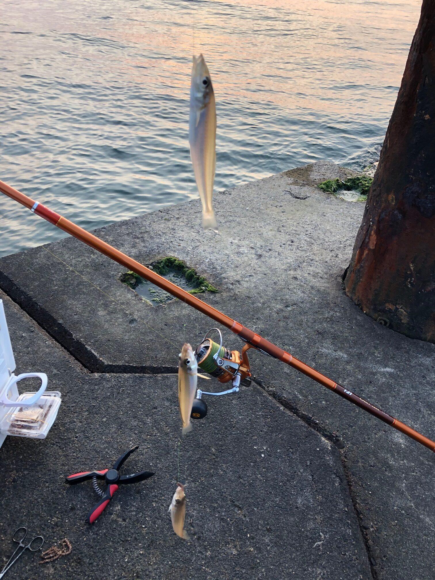 キャンプ ランタン 鱚 キス釣り キャスティズム 投げ釣り ちょい投げ
